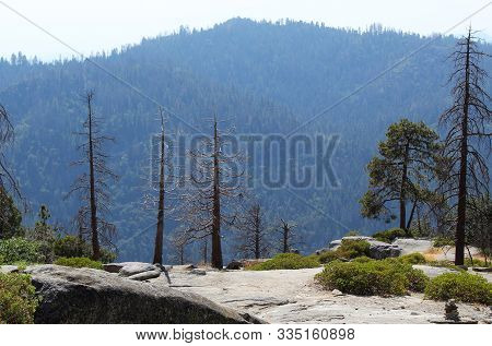 Landscape With Tall Trees And Mountain View