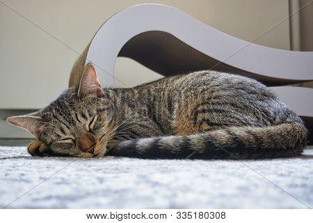 Cute Kitten Sleeping On A Carpet Next To A Cat Scratcher