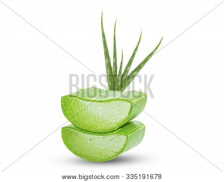 Slice Aloe Vera (aloe Barbadensis Mill.,star Cactus, Aloe, Aloin, Jafferabad Or Barbados) A Very Use