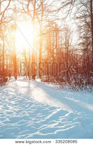 Winter landscape. Winter december  wonderland scene. Christmas, New Year postcard design. Wintertime magic.