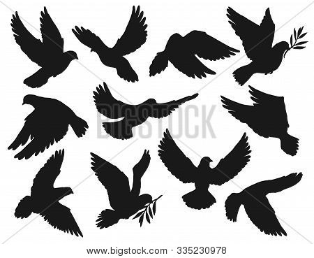 Dove Icons, Peace And Easter Symbol, Pigeon Bird Flying With Olive Branch Twig In Beak. Vector Dove