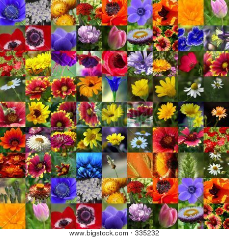 Colorful Flower Photo Collage