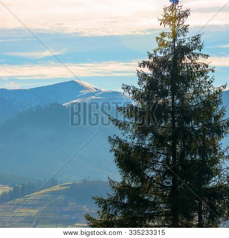 Lovely November Countryside Background. Spruce Trees On Foreground. Distant Mountain With Snow On To