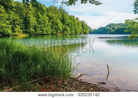 Morske Oko Lake Among Primeval Beech Forest With Grassy Shore. Beautiful Vihorlat Scenery Of Slovaki