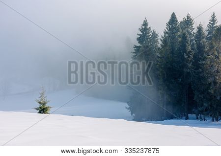 Spruce Trees In Mist And Hoarfrost On The Snow Covered Meadow. Beautiful Winter Nature Background