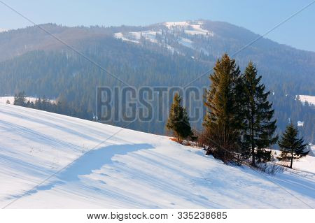 Winter Fairy Tale In Carpathian Mountains. Amazing Scenery Of Borzhava Ridge. Spruce Forest On Hills