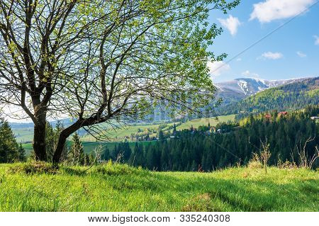 Tree On The Grassy Meadow In Mountains. Wonderful Warm Sunny Day. Great Springtime Scenery. Village