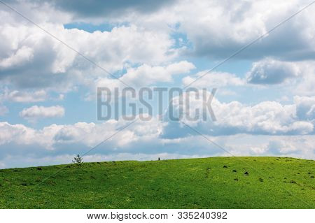 Grassy Meadow In Dappled Light Beneath A Cloudy Sky. Wonderful Sunny Weather In Springtime. Beautifu