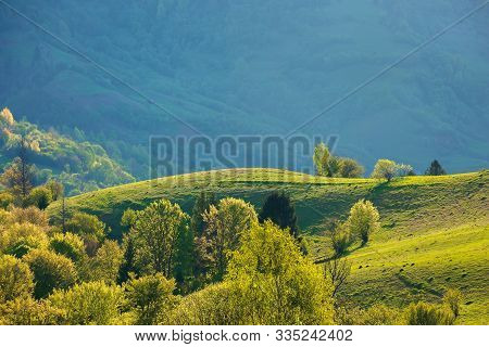 Beautiful Rural Landscape In Springtime. Mountain Scenery With Grassy Rolling Hills. Wonderful Sunny