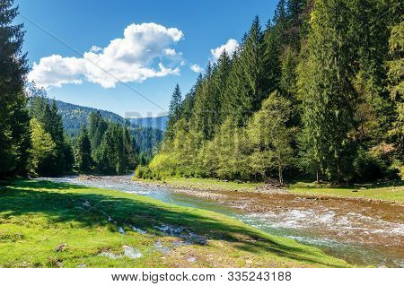 Rapid Mountain River In Spruce Forest. Beautiful Sunny Morning In Springtime. Grassy River Bank And