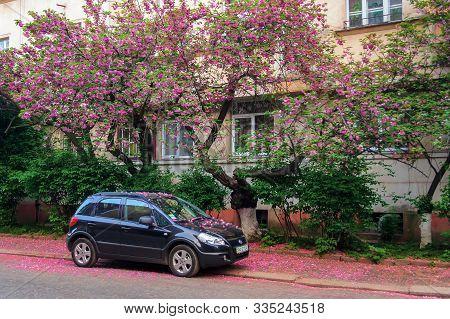 Uzhhorod, Ukraine - 02 May, 2010: Black Compact Suv Car Under The Cherry Tree In Blossom. Typical Sc