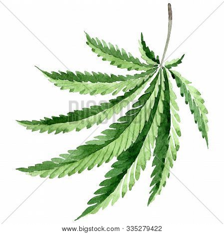 Cannabis Green Leaves. Watercolor Background Illustration Set. Isolated Cannabis Illustration Elemen