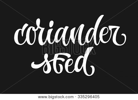 Coriander Seed - White Colored Hand Drawn Spice Label. Isolated Calligraphy Scrypt Stile Word. Vecto