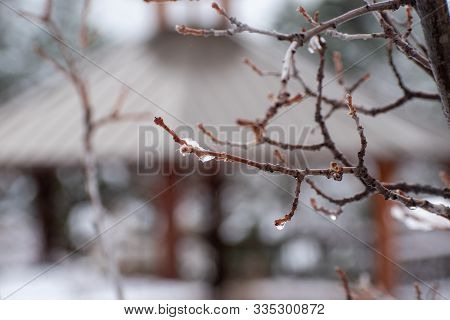 Ice Dripping From A Branch In Front Of A Gazebo