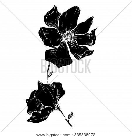 Vector Magnolia Floral Botanical Flowers. Black And White Engraved Ink Art. Isolated Magnolia Illust