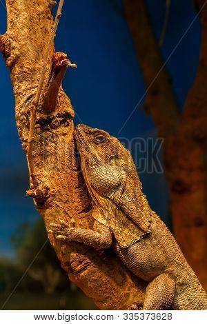 Lizard Reptile Disguised Aginst A Tree Branch