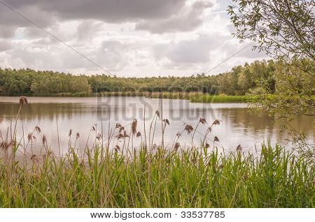 Small Lake With Reed And Trees