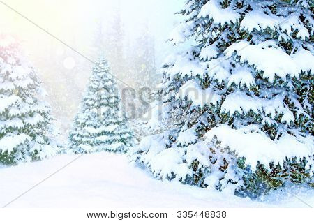 Beautiful Winter Forest. Landscape With Christmas Trees Covered In Snow In Winter Forest. Snowdrifts