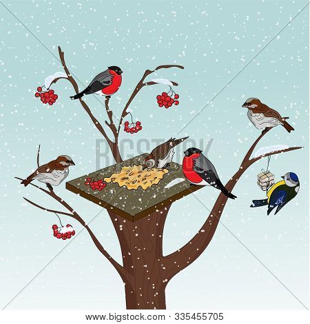 Bird Feeder On A Tree. Cold Winter. Feed The Birds In The Cold. Bullfinches And Tit With A Feeder On