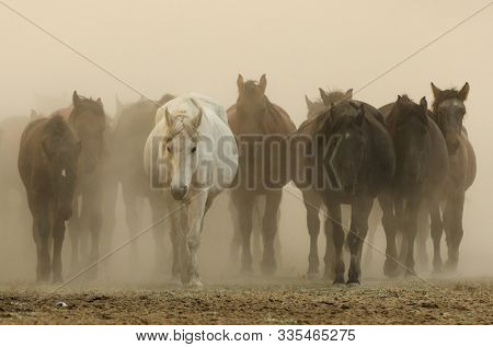wild horses  riding in a dusty sunset