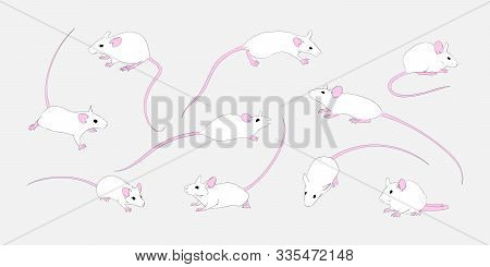Set Of White Rats In Different Poses. Small Cartoon Mouse Collection. Vector Animal Illustration, Ne