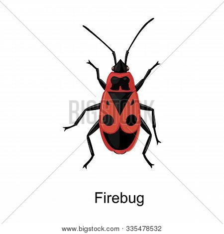 Insect Firefly Vector Icon.cartoon Vector Icon Isolated On White Background Insect Firefly .