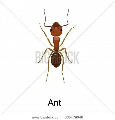 Ant Vector Icon.cartoon Vector Icon Isolated On White Background Ant .