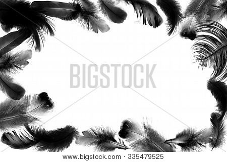 Frame Or Border From Bird Feathers. Concept For Design, Editing And Copying.  Variation Of Black Fea