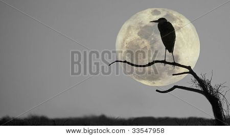 Great blue heron, ardea Herodias, profiled against sky and rising full moon poster