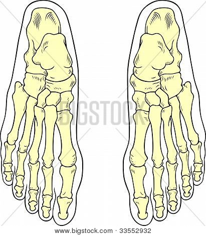 Human foot bones isolated on white background poster