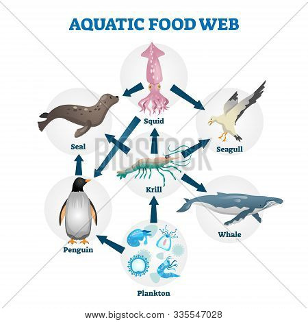 Aquatic Food Web Vector Illustration. Labeled Educational Water Life Scheme. Wildlife Cycle As Natur