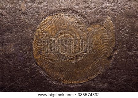 Fossil Trilobite Imprint In The Sediment Backlit By Lamp