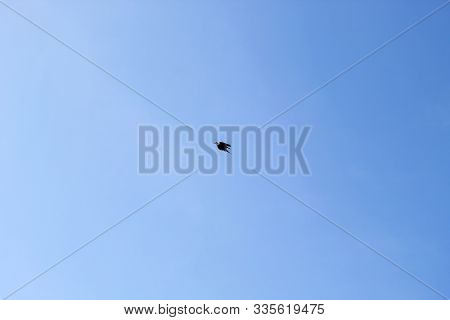 Single Pigeon Flying During Summer Day On The Sunny Blue Sky, Concep Images