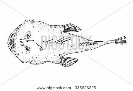 Angler Fish. Hand Drawn Realistic Black Line Illustration.