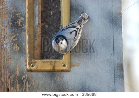 Bird At Feeder 2