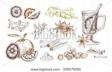 Mulled Wine Spices Hand Drawn Realistic Vector Illustrations Set. Flavoring Seeds And Herbs Isolated