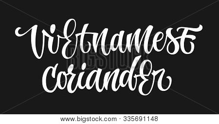 White Colored Hand Drawn Spice Label - Vietnamese Coriander. Isolated Calligraphy Script Style Word.