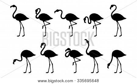 Set Of Silhouette Flamingos. Cute Flamingos Collection. Flamingo Animal Exotic, Nature Wild Fauna. E