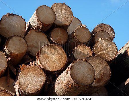 Logs in sunlight with blue sky