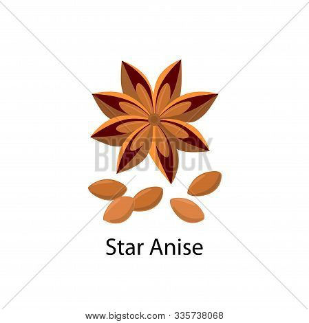 Star Anise And Anise Seeds Vector Illustration In Flat Design Isolated On White Background.