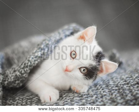 Kitten on a white knitted blanket. Little cut cat at home