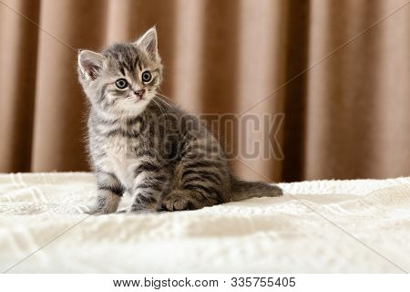 Cute Tabby Kitten Sitting On White Plaid At Home. Newborn Kitten, Baby Cat, Kid Animal And Cat Conce