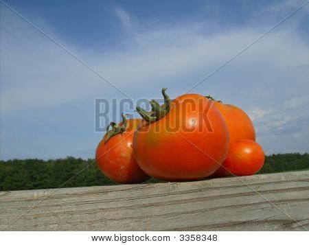 Tomatoes With Trees In Background