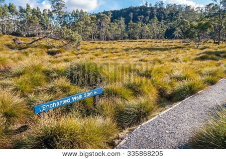Tasmania, Australia - July 23, 2014: Tussock Grassland And Eucalyptus Forest With Sign To Hiking Pat