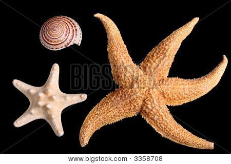 Starfishes And Seashell