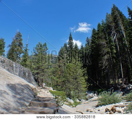 Background Landscape Of Tall Pine Trees And Rocks