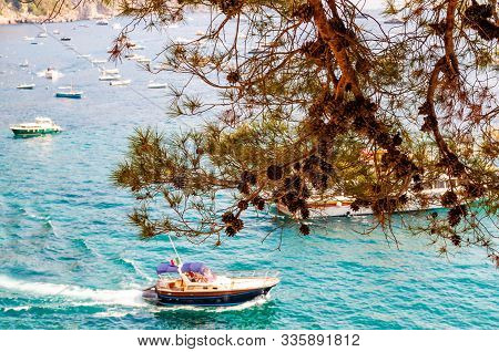 Floating Boats In Tyrrhenian Sea Waters Under The Hanging Down Pine Tree Branch Full Of Pine Cones.
