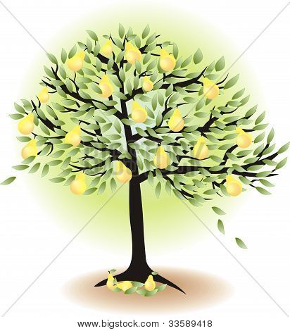 Fruit Tree With Leafs And Pears Isolated On White