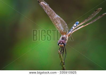 Dragonfly hold on dry branches and copy space .Dragonfly in the nature. Dragonfly in the nature habitat. Beautiful nature scene with dragonfly outdoor.a background.The concept for writing