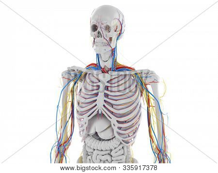 3d rendered medically accurate illustration of the vascular and nervous anatomy of the head